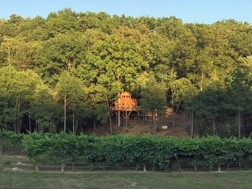 Blue Ridge Treehouse @ Bear Claw Vineyards
